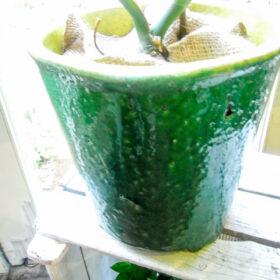 鉢カバーの画像